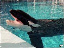 killerwhaleattacktrainer